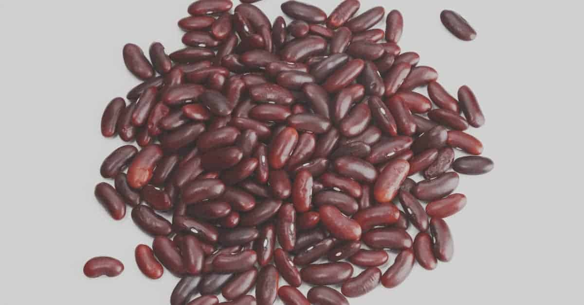 Kidney Beans Plant Based Protein Vegan Protein